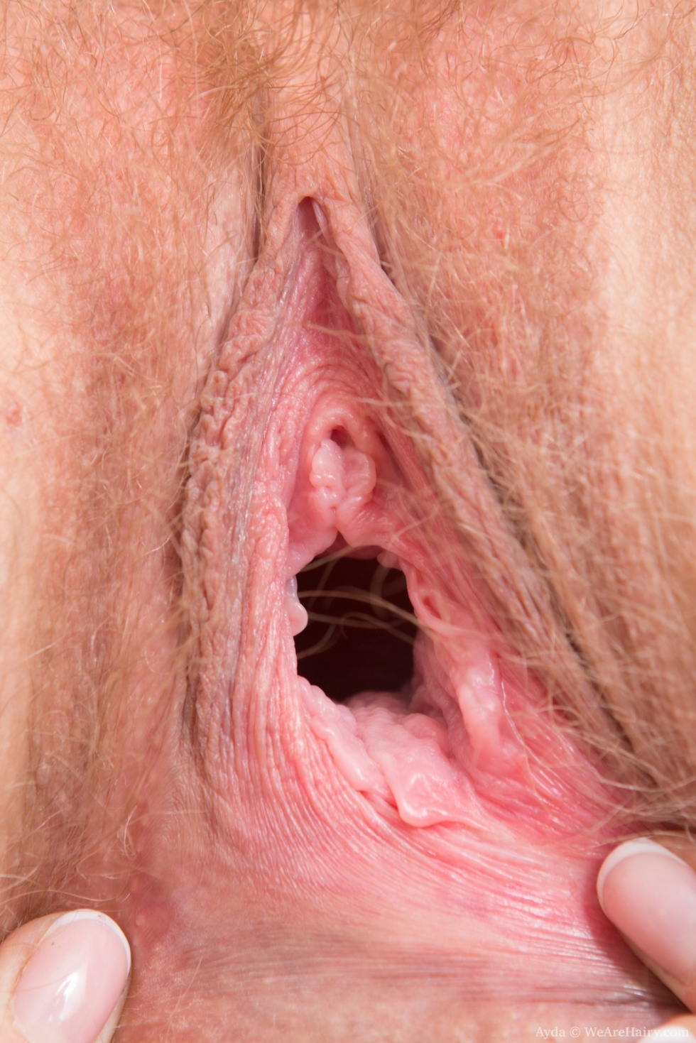 image Movies of hairy s fucked by boys gay